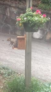 Bruce the squirrel