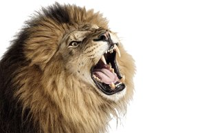 Let your roar be heard!